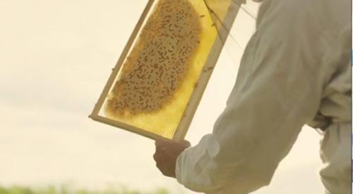 蜜がつまっています。