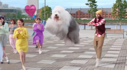 犬が宙に浮いています。