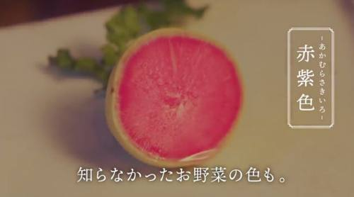 知らなかったお野菜の色も。